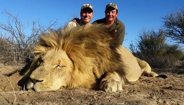 Americans Kill Hundreds Of Lions Each Year, For Fun