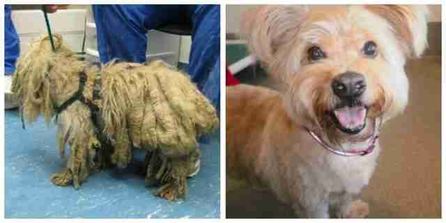 Your Dogs Matted Hair Isnt Just Uncomfortable Its Dangerous