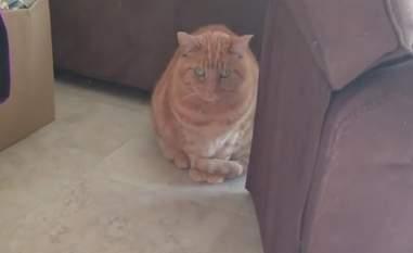 Mandy the orange cat