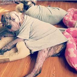 Shelter dog with mange in cat bed