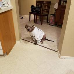 Mange dog in doorway