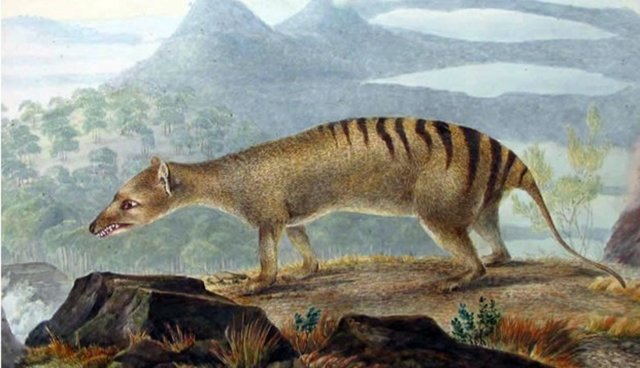 the quest for the thylacine the dodo