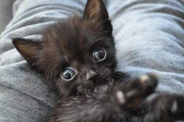 special needs kitten