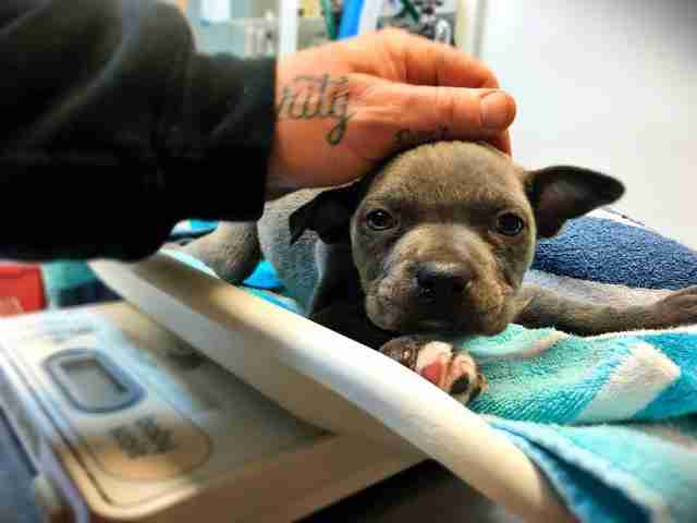 Puppy Thrown Away Because He Couldn't Stand Has Best Life Now