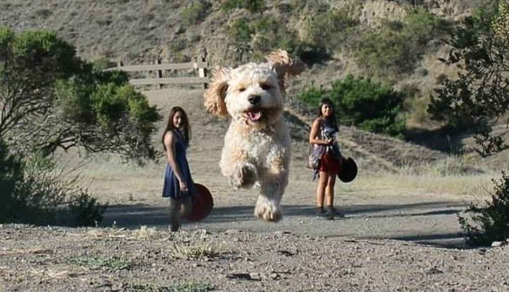 Perfectly Timed Photos That Make Dogs Look Like Giants