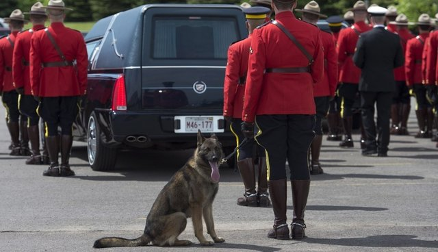 5 incredibly devoted dogs who mourned the deaths of their owners 5 incredibly devoted dogs who mourned the deaths of their owners the dodo m4hsunfo