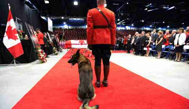 5 incredibly devoted dogs who mourned the deaths of their owners share on facebook m4hsunfo