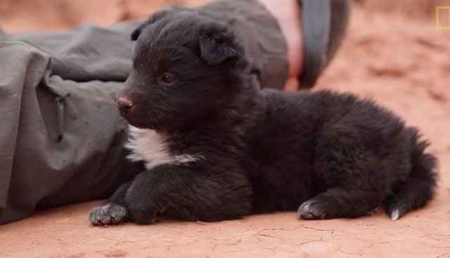 Hikers Stumble Upon Abandoned Puppy, Decide To Keep Him