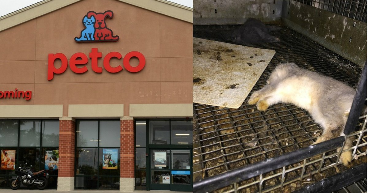 This Is Where Petco And PetSmart Get Their Animals - The Dodo