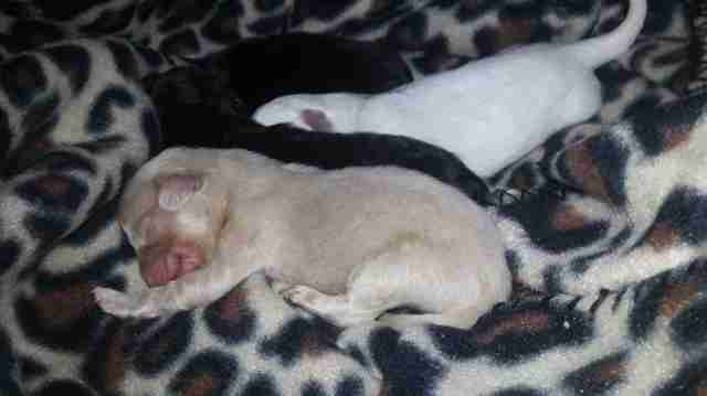 Puppies rescued from backyard breeder