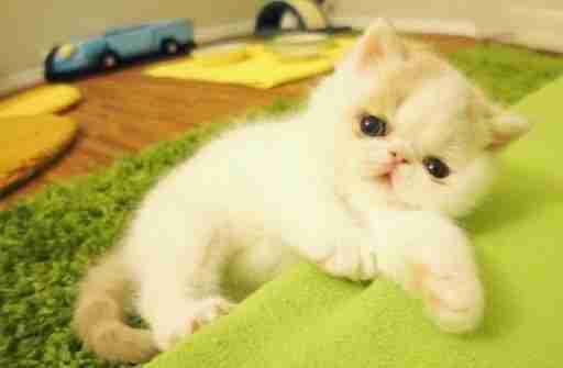 http://catsandkittensfree.blogspot.com/2015/04/watch-this-adorable-kitten-bark-like.html