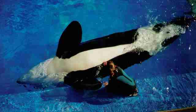 Ex-SeaWorld Trainers: Here's A List Of The Drugs We Fed To Orcas