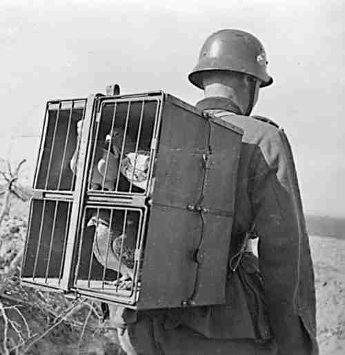 Image result for world war 1 carrier pigeon
