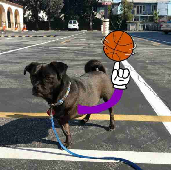 three-legged dog gets cartoon arm