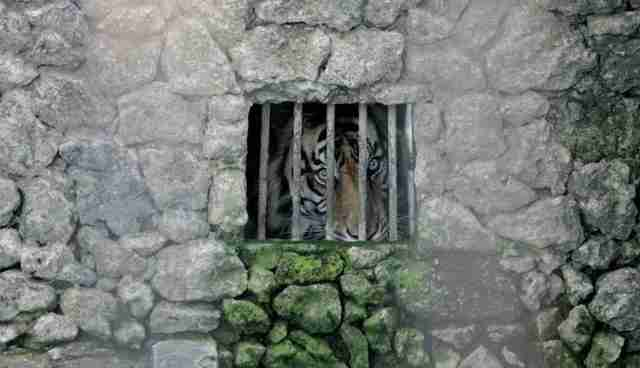 The 5 Worst Zoos In The World -- And How To Save Their Animals ...