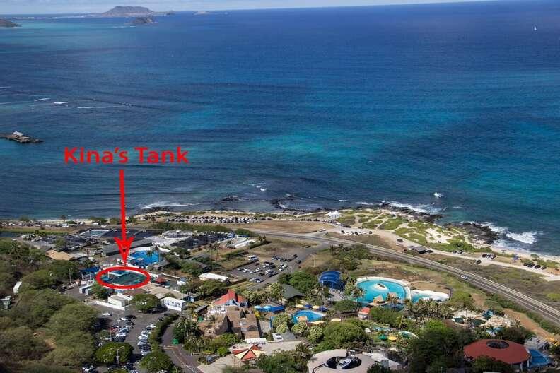 Kina's tank at Sea Life Park in Hawaii