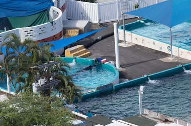 """Kina in the smaller """"medical pool"""" at Sea Life Park in Hawaii"""