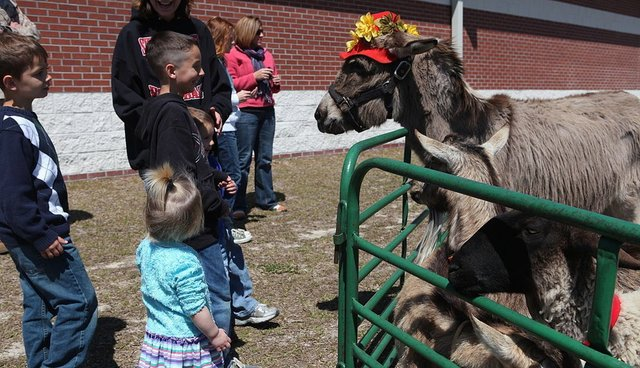 A Petting Zoo Visited My Son's School And I Stopped Being