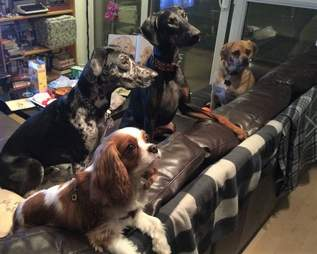 dogs waiting for treats