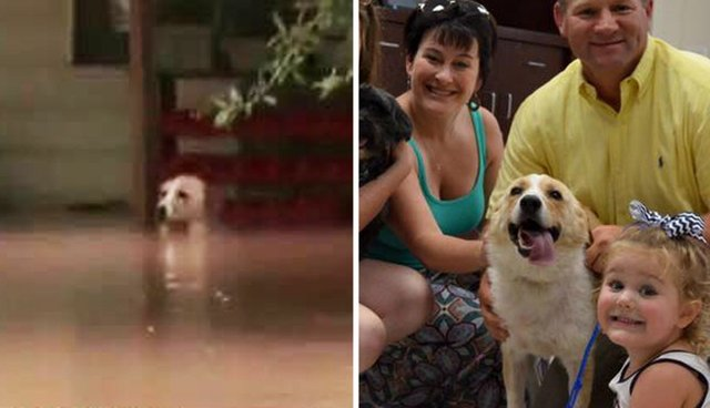 Dog Chained Up During Flood Gets Adopted By The Man Who Saved Her - Some people tied their dogs up and left them to die during the flood