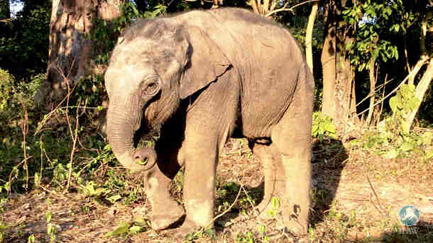 elephant calf at IFAW wildlife rescue in India