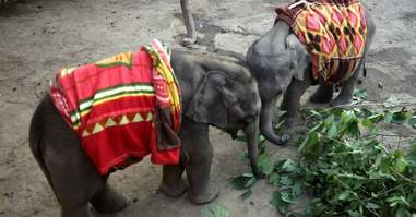 orphaned elephant calves bond at rescue center
