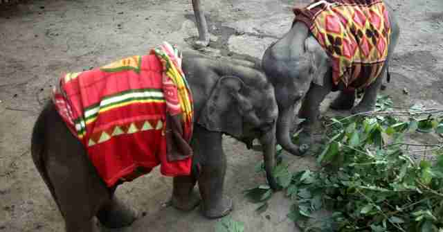 orphaned elephant calves bond at rescue center