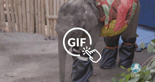 rescued baby elephants wear socks and blankets