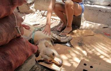 Escot the dog get poisoned in the Galapagos Islands