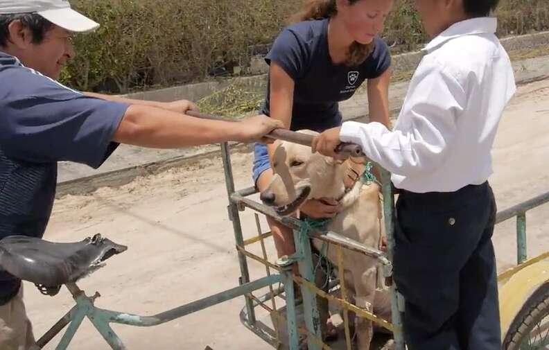 Escot the dog rides to the vet on 'ambulance' bike
