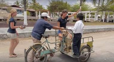 Dog On Ambulance Bike