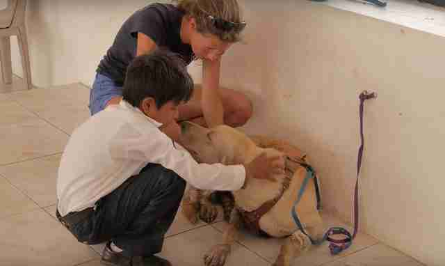 Escot the dog gets help at a vet clinic in the Galapagos