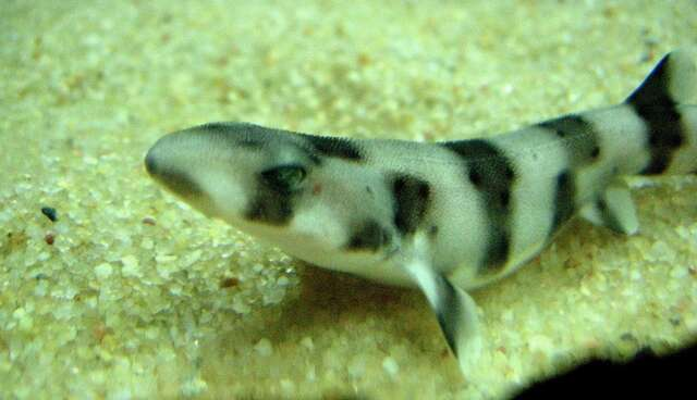 Baby Sharks Rescued From Fish Market Released Into The ...