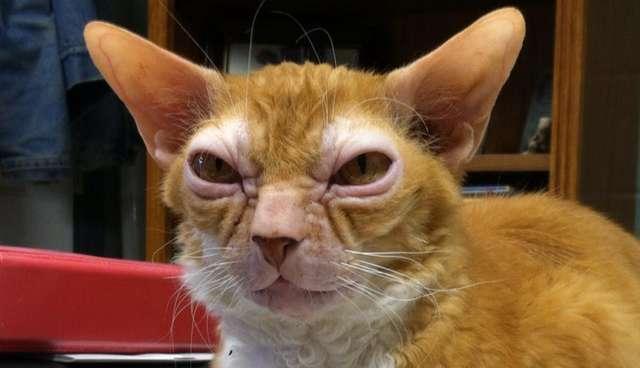 Katze Hässlich