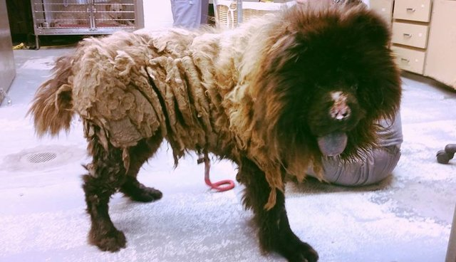 Dog Gets Groomed Loses  Pounds