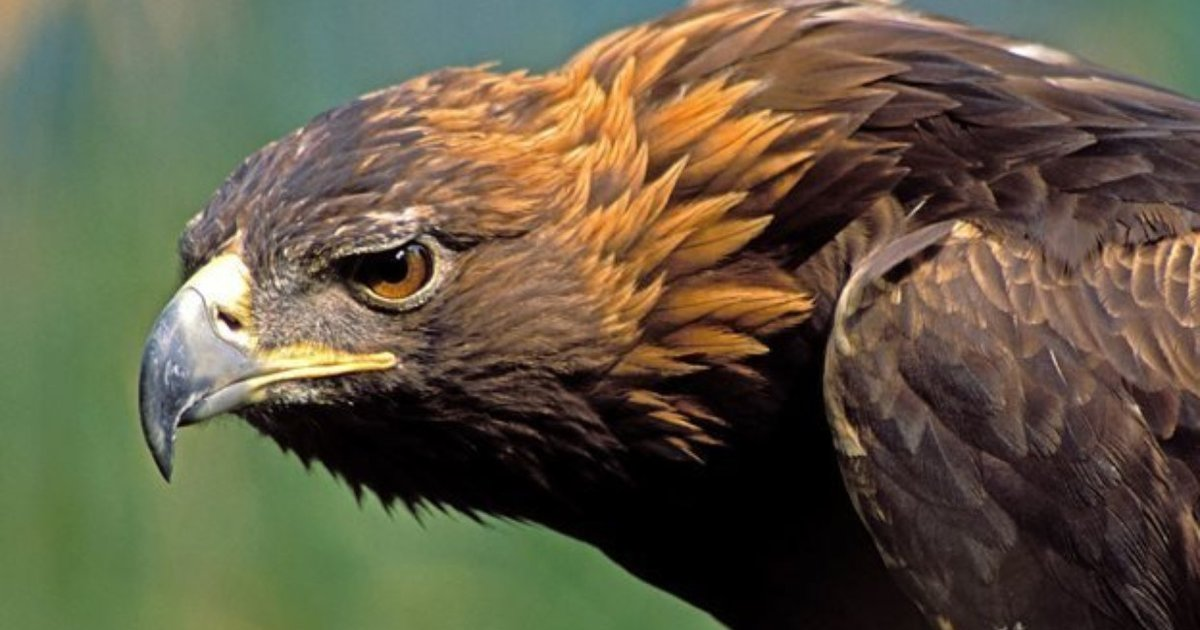 sex-dating-in-golden-eagle-illinois
