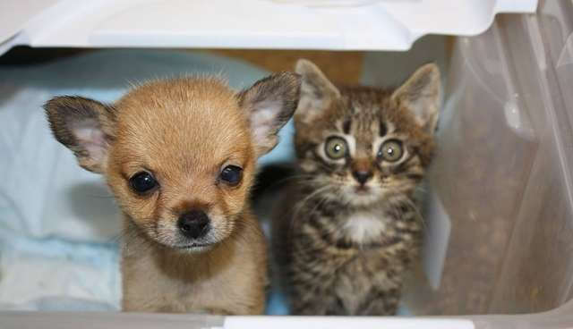 Shelter Kitten And Puppy Basically Saved Each Other's Lives