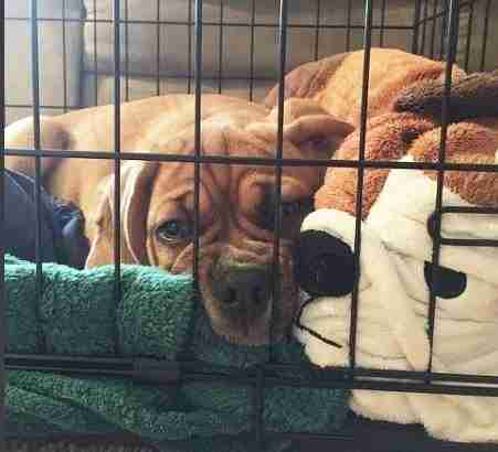 Should You Let Your New Puppy Sleep In Your Bed The Dodo