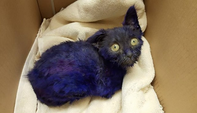 Purple Kitten Once Used As 'Chew Toy' Makes Stunning Transformation