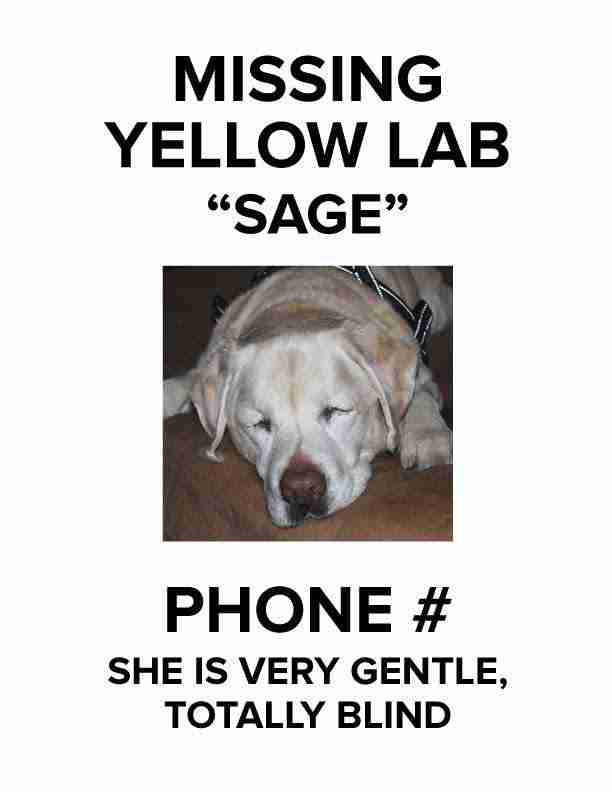 Missing dog flyer