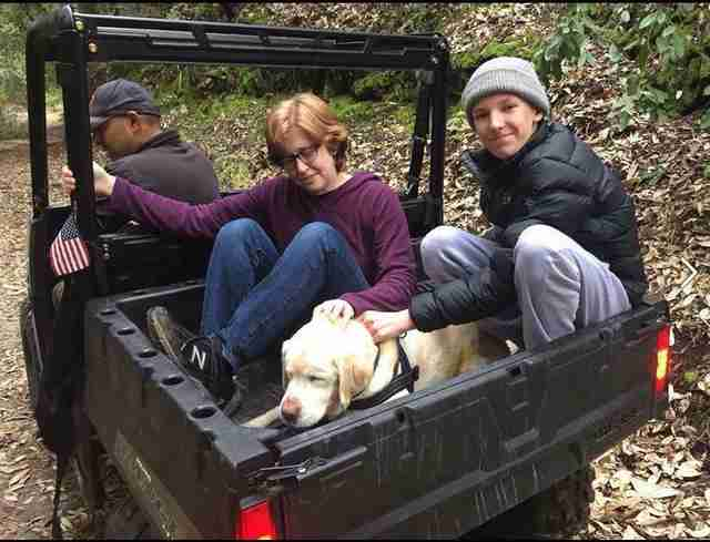 Missing blind yellow Labrador reunited with his family