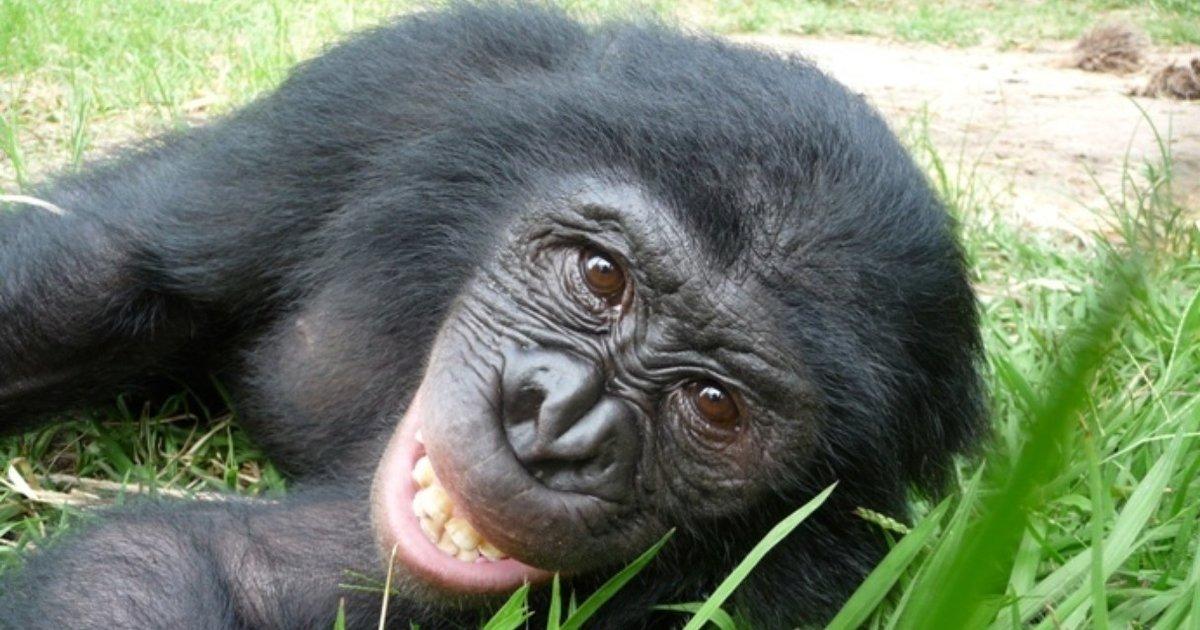 oralsex-mit-schimpansen-heisse-athletische-babes-lesben-s
