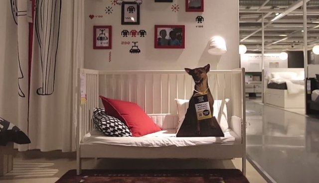 Clever Ikea Campaign Shows How Adopting A Pet Can Really Tie The