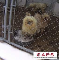Iowa dog breeder licensed by the USDA