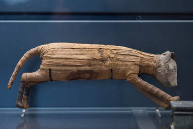 Mummified cat from ancient Egypt