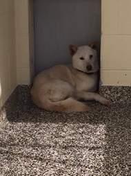 Dog scared at shelter