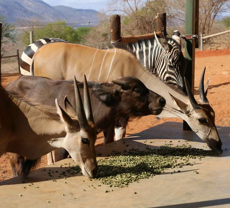 Orphaned African wildlife at DSWT