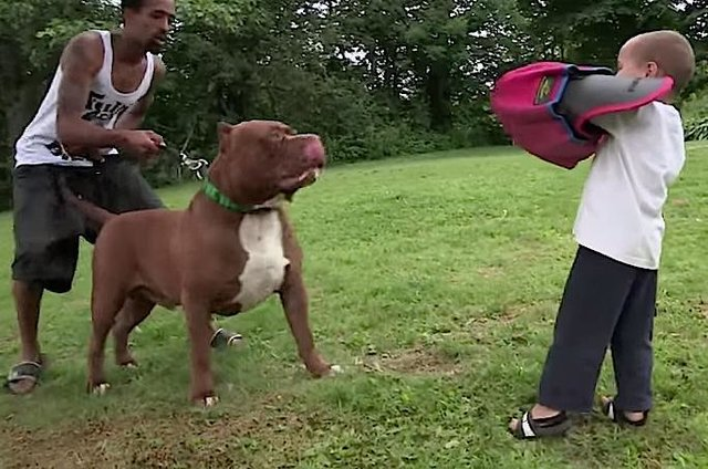 Giant 'Pit Bull' Has Puppies And It's All Kinds Of Wrong