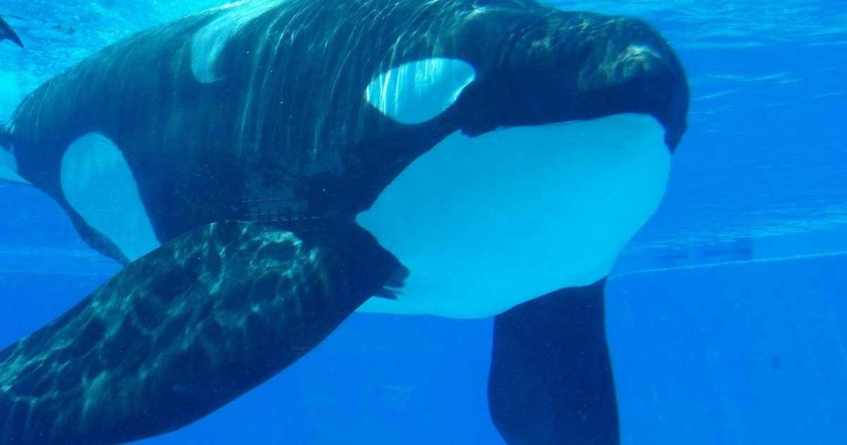 TiliLeaks: Exclusive Documents Reveal SeaWorld's Reckless