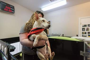 Kit, a special needs puppy getting physical therapy